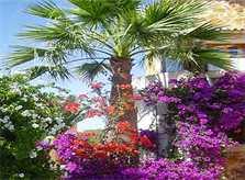 Palme Ferienhaus Mallorca Cala Santanyi 2 Personen PM 647