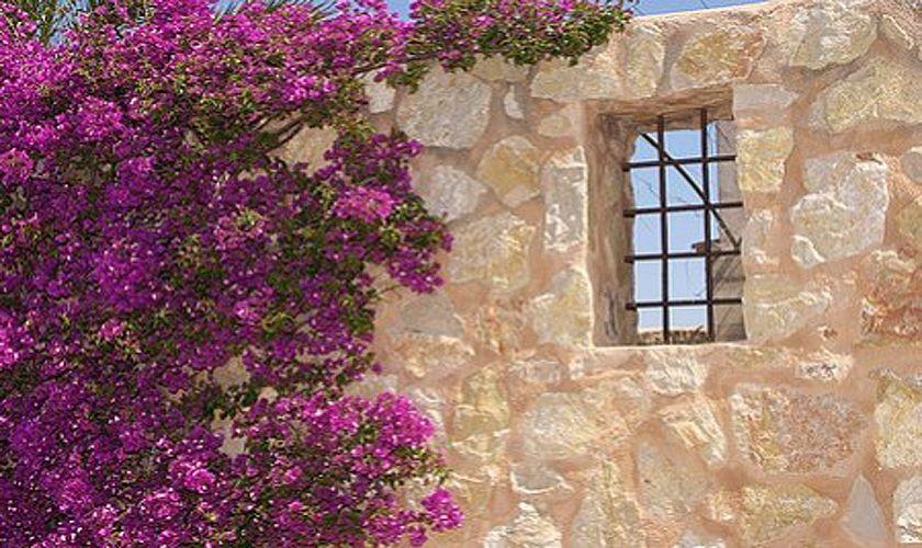 Impression Blumen Finca Mallorca Südosten 10 Personen PM 6555