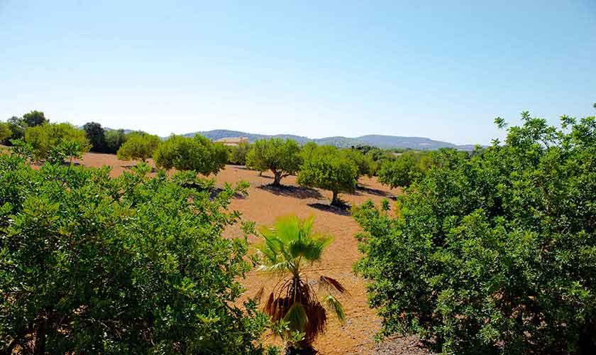 Landschaft Finca Mallorca Südosten PM 6568