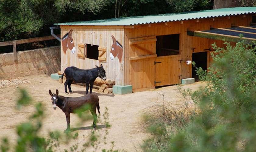 Ponys in der Nachbarschaft Finca Mallorca 4 Personen PM 6950