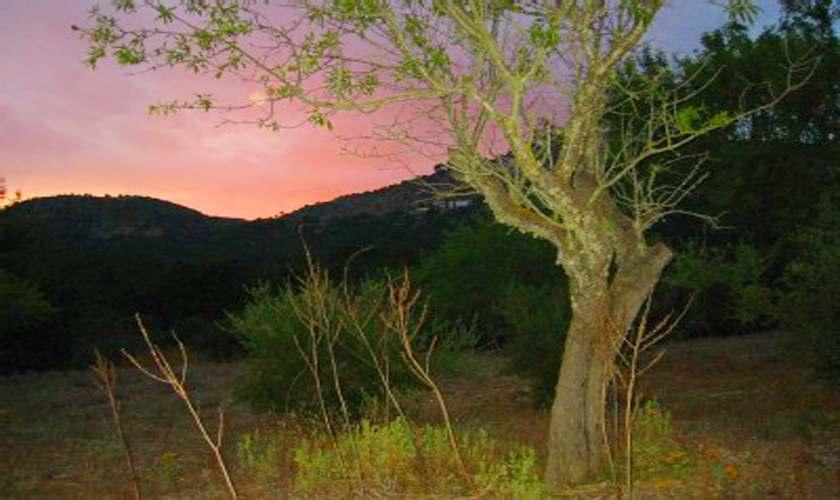Sonnenuntergang Finca Mallorca 4 Personen PM 6950
