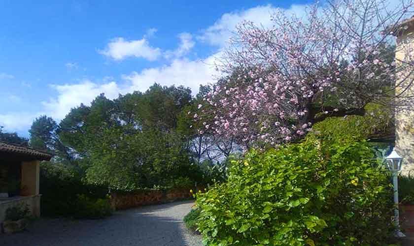 Garten Finca Mallorca 6 Personen PM 120