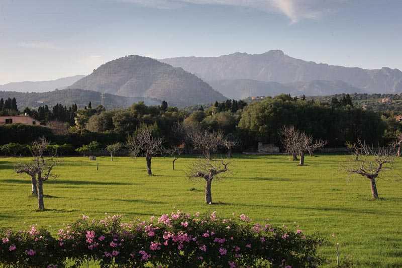 Blick in die Landschaft  Finca Mallorca Norden PM 3407