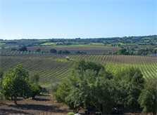 Landschaft 2 Finca Mallorca PM 6015