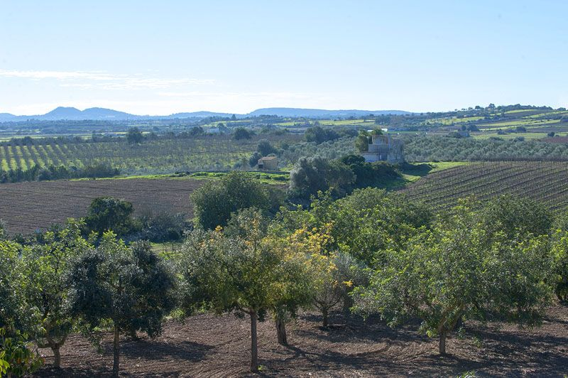 Blick in die Landschaft Finca Mallorca PM 6015 für 12 Personen