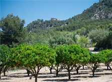 Blick in die Landschaft  Finca Mallorca Südosten PM 6065 für 8 Personen
