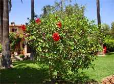 Garten 5 Finca Mallorca Südosten mit Pool und Tennisplatz PM 6074