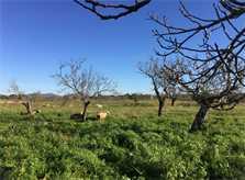 Blick in die Landschaft Ferienfinca Mallorca Ostküste PM 6343 für 6 - 7 Personen